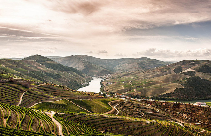 wine-in-douro-valley